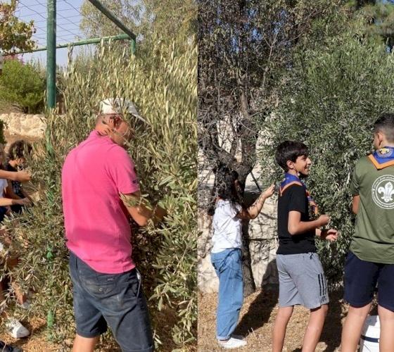Olive picking campaign at Emmanuel Monastery in Bethlehem
